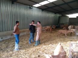 La Asociación Española de Criadores de la Cabra Malagueña apuesta por la vigilancia contra la Agalaxia Contagiosa