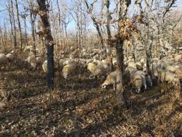 Registro de jornada en el sector ganadero y agrario