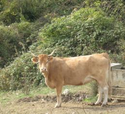 FORO-AGROGANADERO-Gobierno-destina-300.000-euros-a-promover-la-cria-de-razas-puras-en-las-explotaciones-ganaderas-cantabras