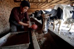 FORO AGRO GANADERO, Los costes de piensos siguen altos por el constante desequilibrio del mercado mundial