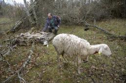 FORO AGRO GANADERO, El noroeste defiende el control del lobo ante 10.000 muertes de ganado al año