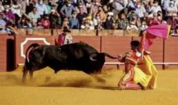 AXON COMUNICACION, El PSOE debatirá varias peticiones para extinguir la tauromaquia
